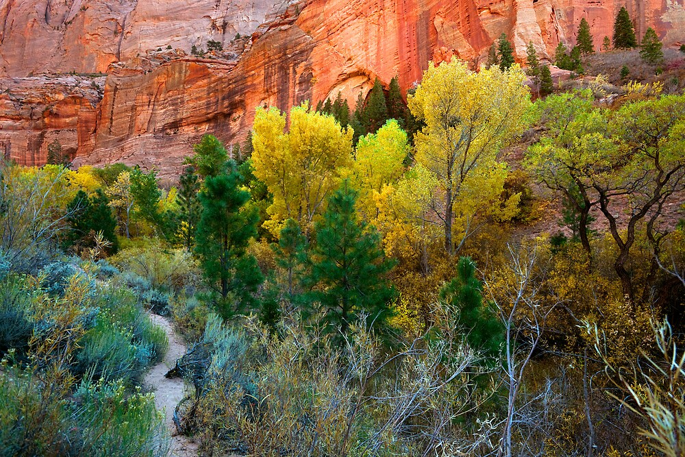 Kolob Canyon Fall Colors by Zane Paxton