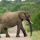Elephant Walking - WildAfrika by WildAfrika