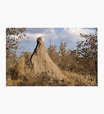 Termite Mound - WildAfrika Photographic Print