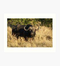 Cape Buffalo 2 - WildAfrika Art Print