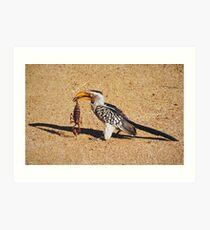 Souhern Yellow Hornbill - WildAfrika Art Print