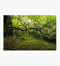 Mossy Forest Photographic Print