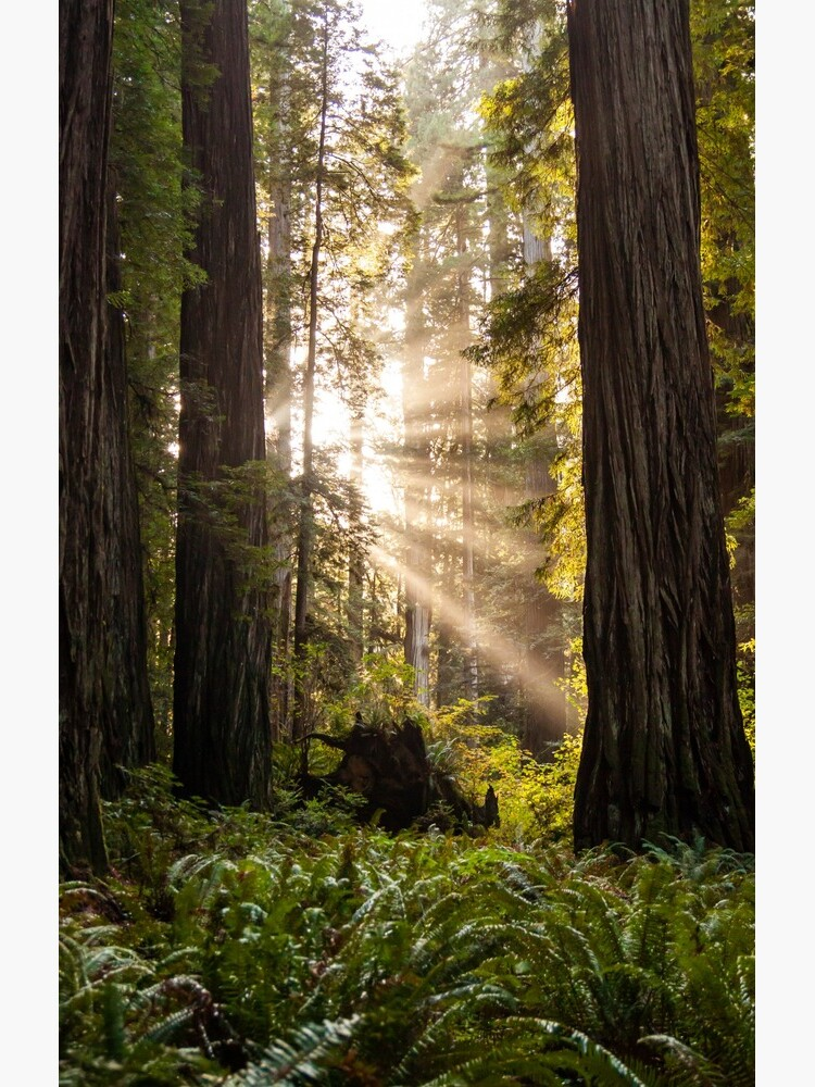 Forest Sunrays by codyjoseph