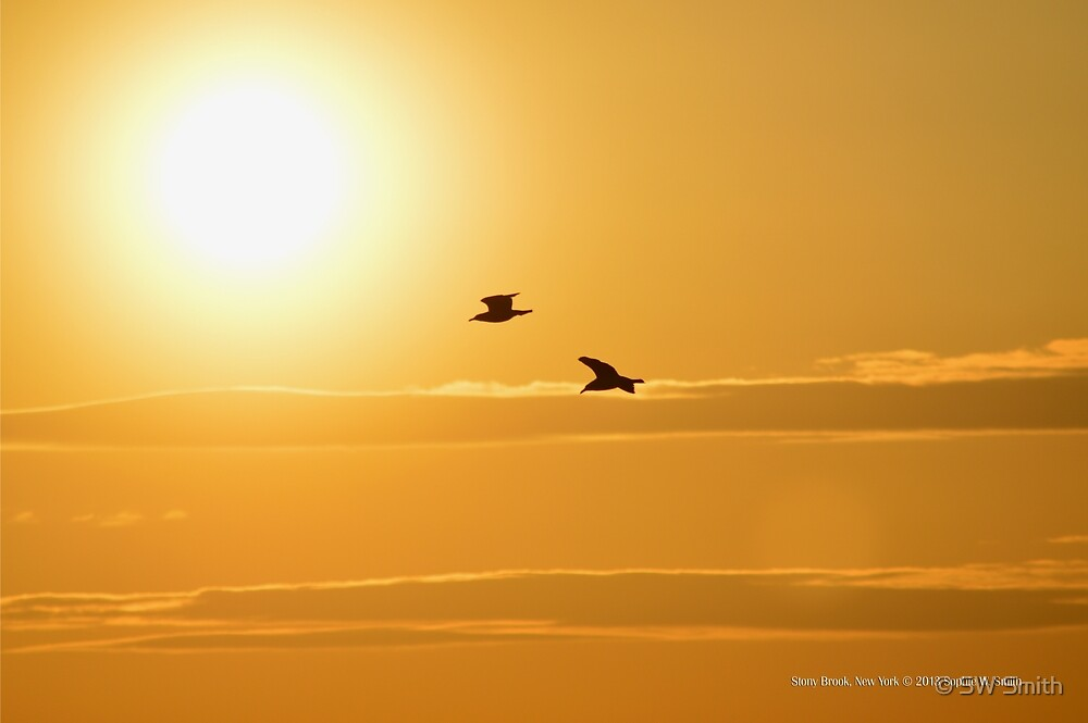 Two Seagulls Flying Towards The Burning Evening Sun - Stony Brook, New York  by © Sophie W. Smith