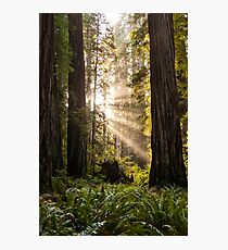 Forest Sunrays Photographic Print