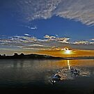 Pelicans at Sunset by bazcelt