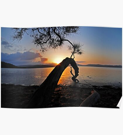 sunset lake tree highlights Poster