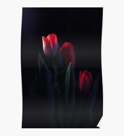 Tulips for My Tulip Poster