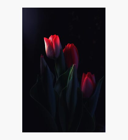 Tulips for My Tulip Photographic Print