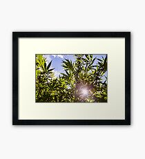 Sunshine Ganja Framed Print