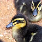 Duckling by Sherry Pundt