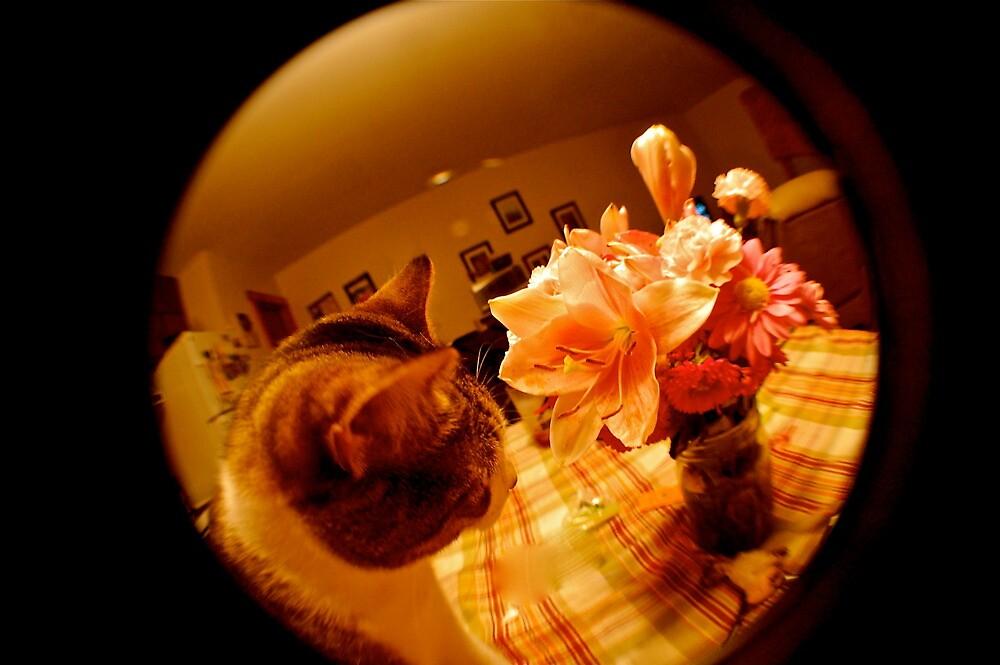 Louie & Flowers by LeanneDixon