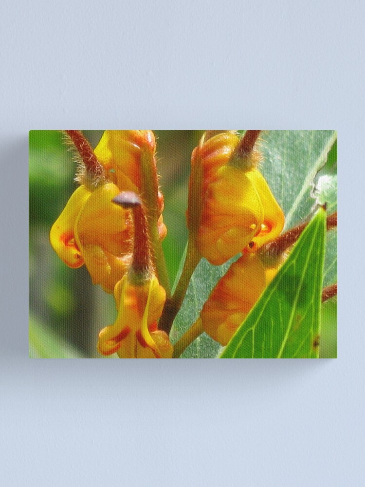 Alternate view of Grevillea Orange Marmalade Canvas Print