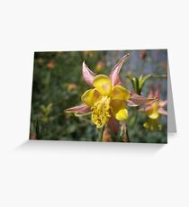 Precious & Beautiful, Colorado Columbine Greeting Card