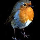 Robin by Clive