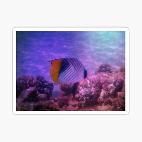Threadfin Butterflyfish Colorfully Sticker