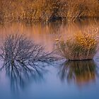 Reflections on Life by Ralph Goldsmith