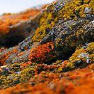 Life Rocks II by Barrie Daniels