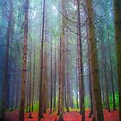 Back to forest by armine12n