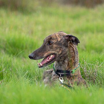 Dusty the Greyhound by AndreGascoigne