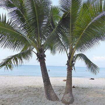 Tropical Beach Palm Trees  by Artification