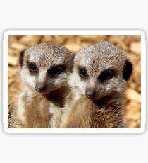 Meerkat Pups Sticker