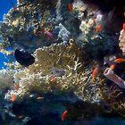«Misterioso y hermoso mundo submarino del mar rojo» de hurmerinta
