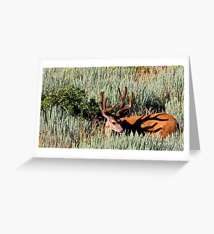 Rack Shadow Greeting Card