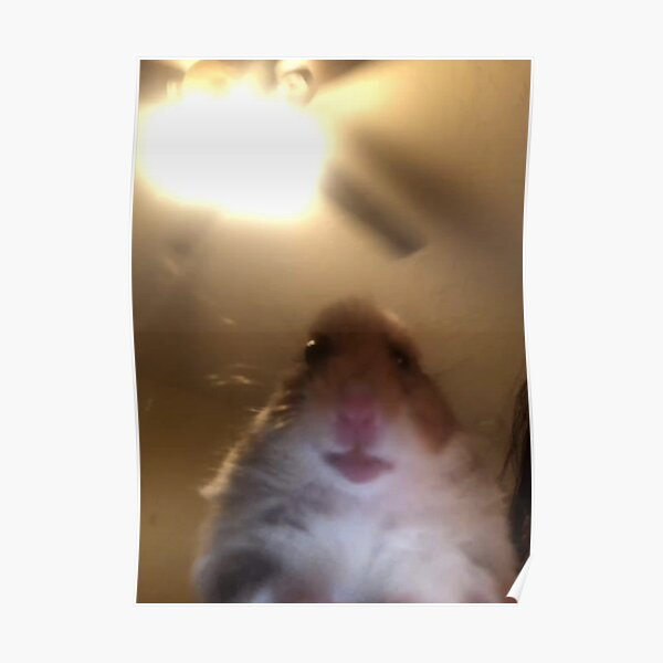 Hamster Staring at Phone Poster