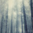 Black forest by armine12n