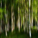 Birchwood by armine12n