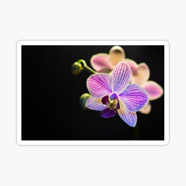 blühen Sticker
