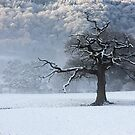 Maentwrog tree - North Wales by Rory Trappe