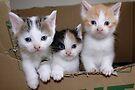 Welcome in the Big, Big, Big World Kitties by Jo Nijenhuis