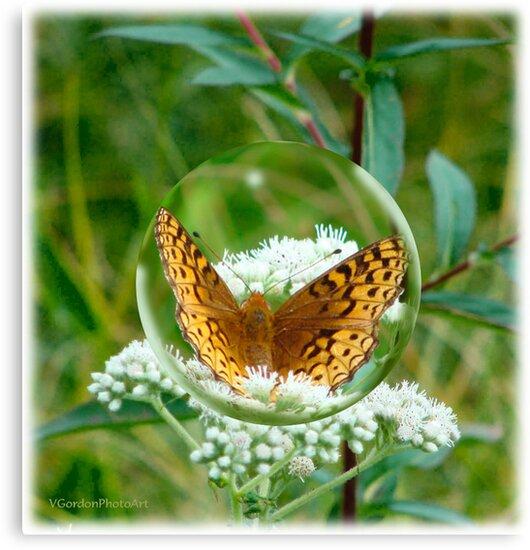Butterfly Bubble by vigor