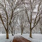 Winter at Boston Common by LudaNayvelt