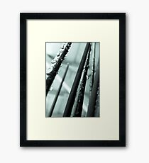 spikes of decorative grass Framed Print