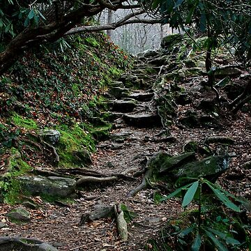 Uncertain Pathways by suddath