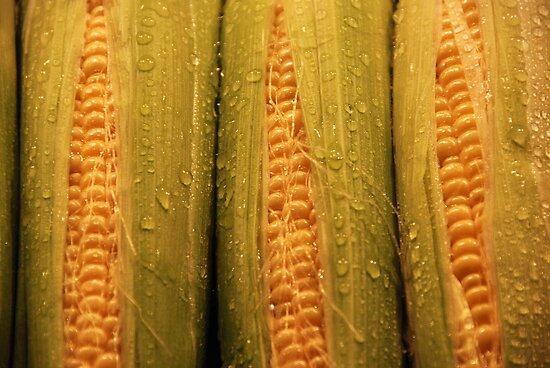 Sweet Corn by John Schneider