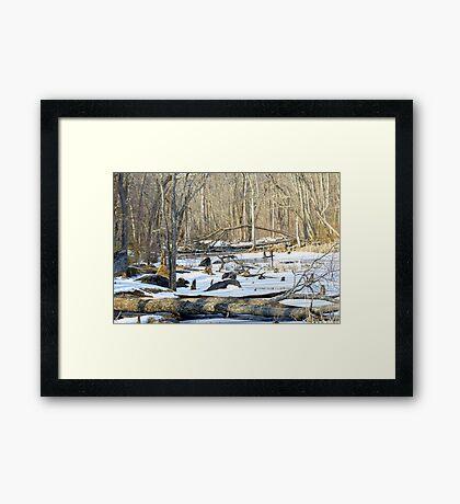 The Winter Swamp Framed Print