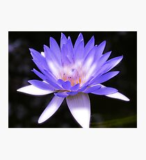 Vibrant purple water lily Photographic Print