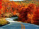 Blazing The Ozark Trails by NatureGreeting Cards ©ccwri