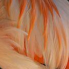 Chilean Flamingo by Kelly Robinson