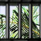 Through The Window by PhoenixArt