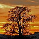 Black Locust Sunset by Rodney55