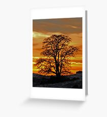 Black Locust Sunset Greeting Card