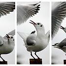 Seagull vs Seagull by Richard Pitman