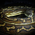 A Python watching Me by Clare Colins