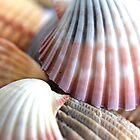 Seashells I by Kathie Nichols
