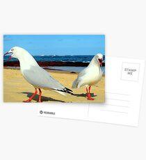 seagull squabble Postcards